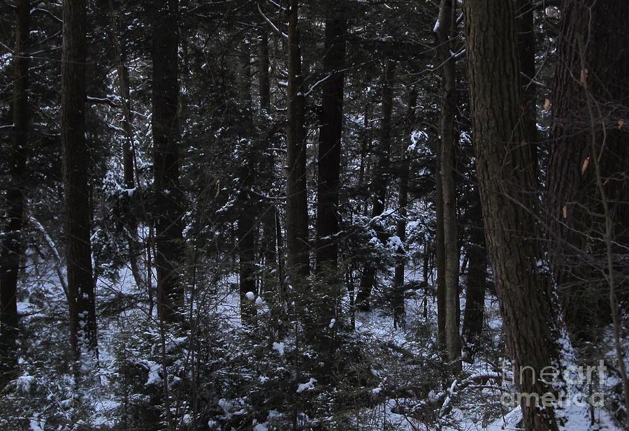 dark winter forest photograph by joshua bales