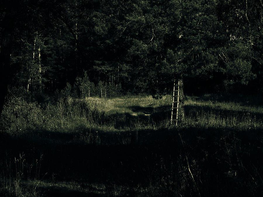 Trees Photograph - Dark Woods by Alexei Biryukoff
