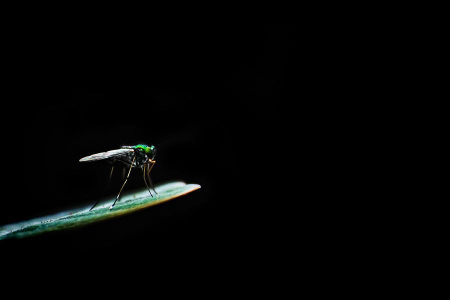 Outdoor Photograph - Dark World by Suradej Chuephanich
