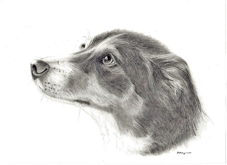 Dash Drawing by Mary Mayes