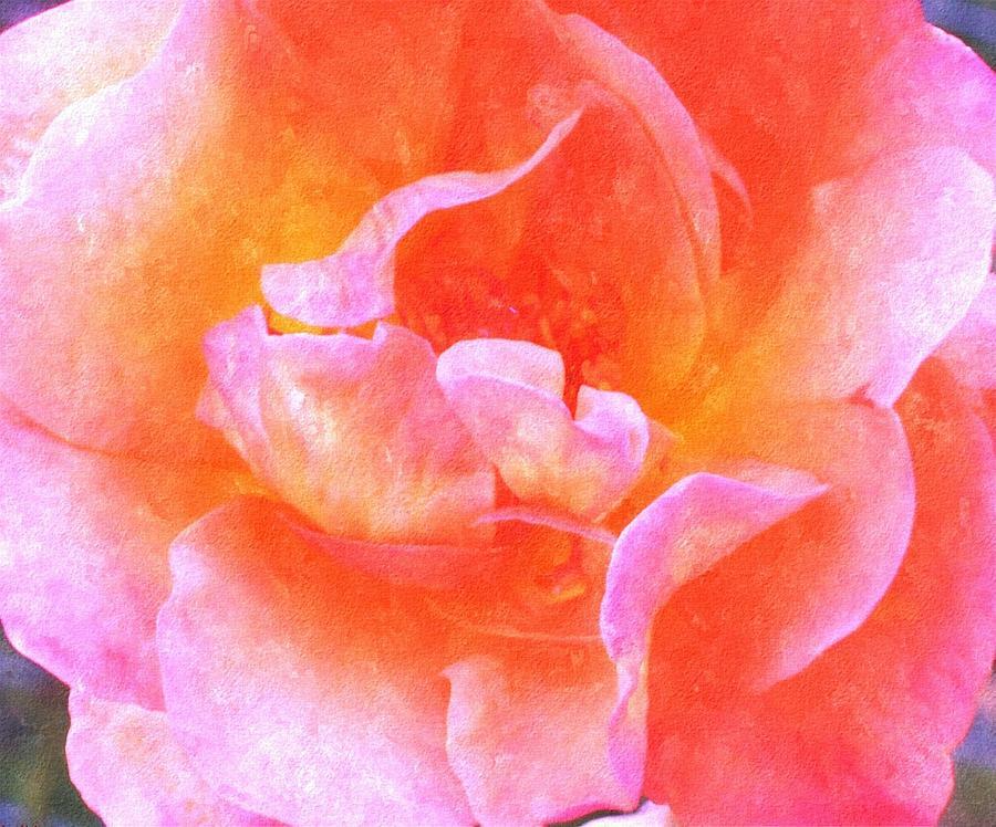 David Austins  Old World Rose Painting by Rosemarie E Seppala