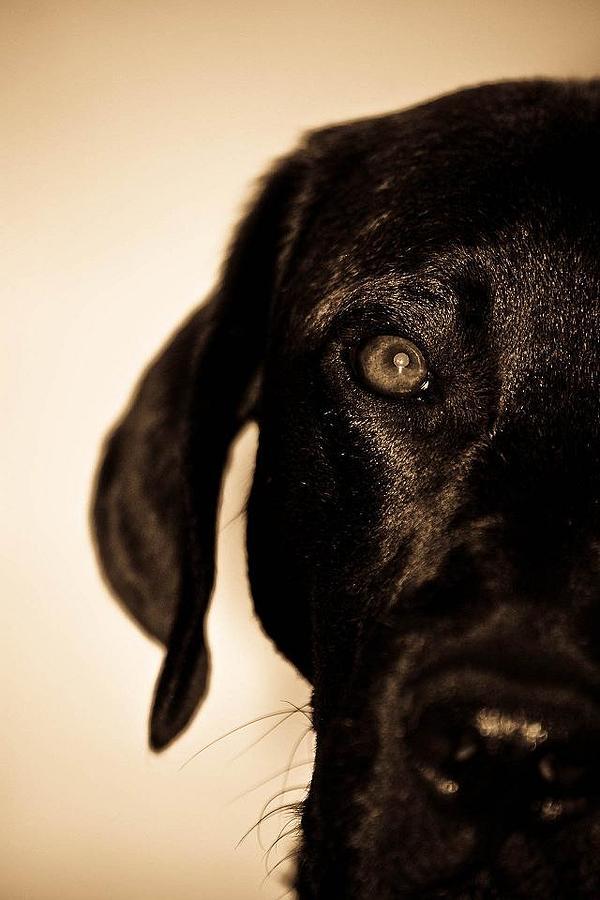 Dog Pyrography - Dawg by Jamie Bishop