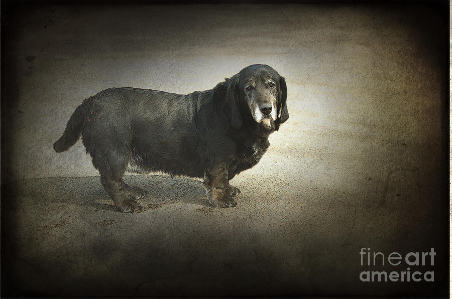 Dog Photograph - Dawg by The Stone Age