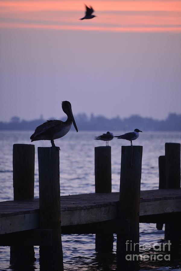 Dawn Brings Hungry Birds by Joan McArthur