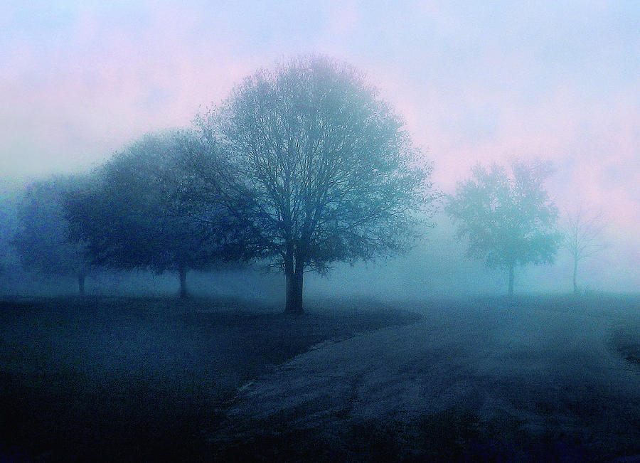 Trees Photograph - Dawn by Jessica Jenney