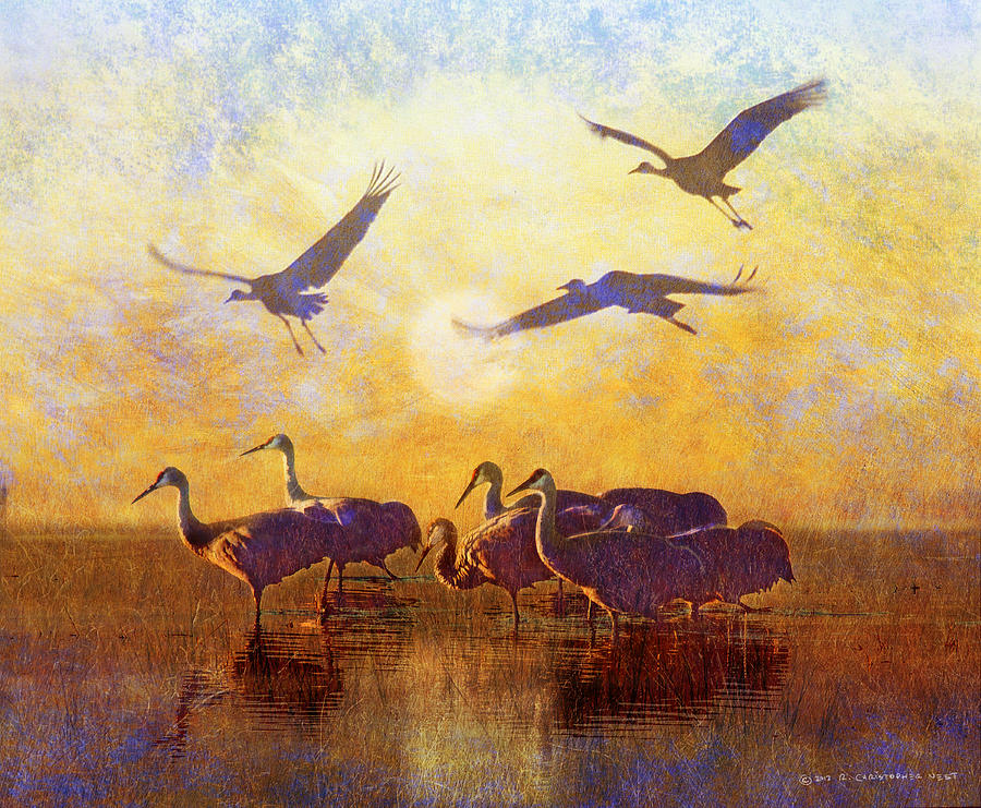 Sandhill Cranes Painting - Dawn On The Bosque Sandhill Cranes by R christopher Vest
