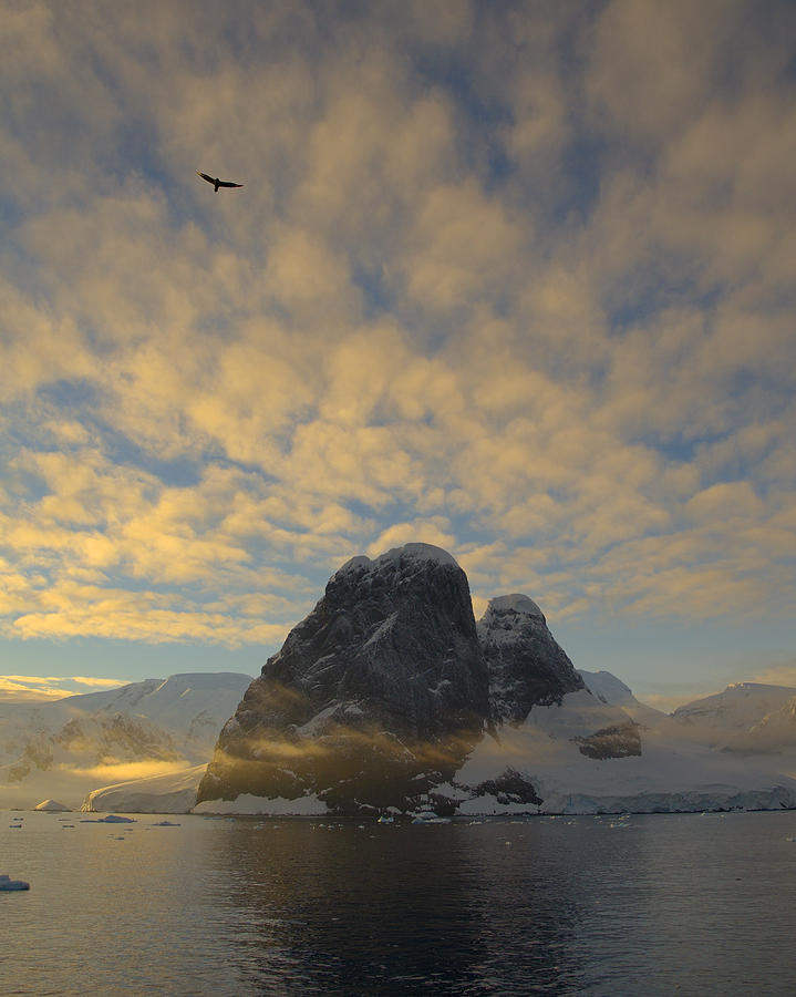Antarctica Photograph - Dawn Over The Lemaire by Tony Beck
