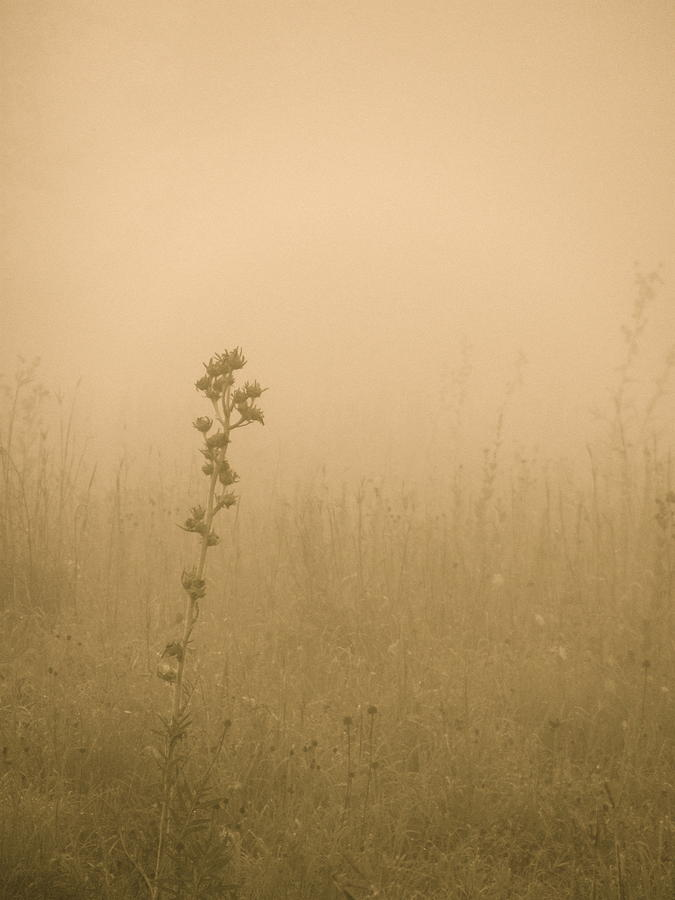 Tiwago Photograph - Dawning Mist by Tim Good