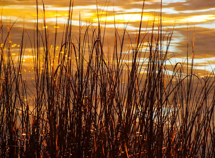 Nature Abstract Photograph - Dawns Early Light by Karen Wiles