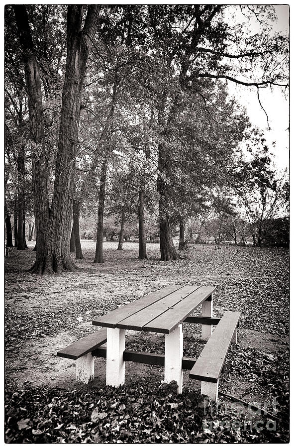 Park Photograph - Day At The Park by John Rizzuto
