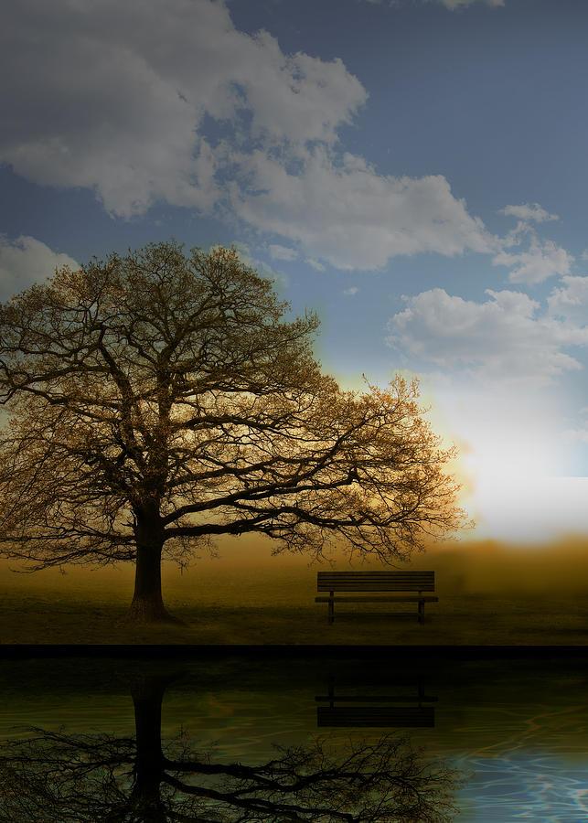 Tree Photograph - Day Break by Mark Rogan