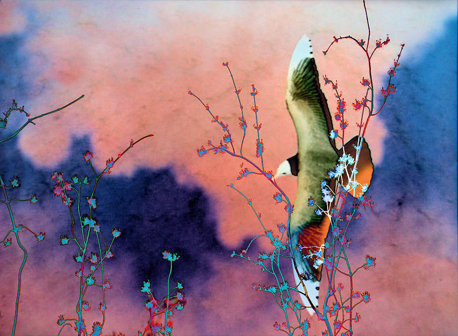Birds Photograph - Day Dreaming by Jan Amiss Photography