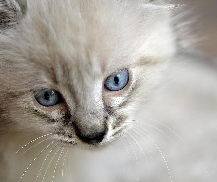 Kitten Photograph - Day Dreaming by Susan Leggett