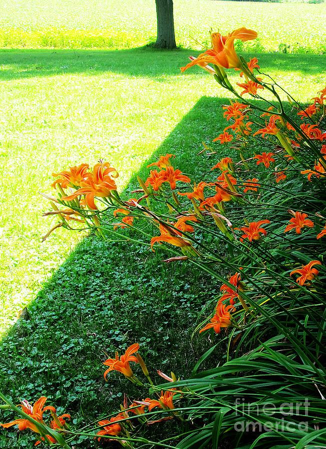 Day Lilies 2012 Season Photograph