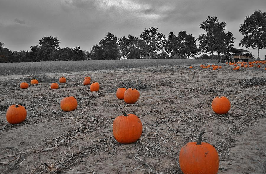 Fall Photograph - Day Of The Pumpkins by Thomas  MacPherson Jr