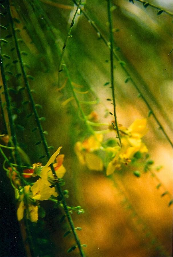 Green And Yellow Stems And Flowers With Soft Focused Background. Photograph - Daydream by Robert Bray