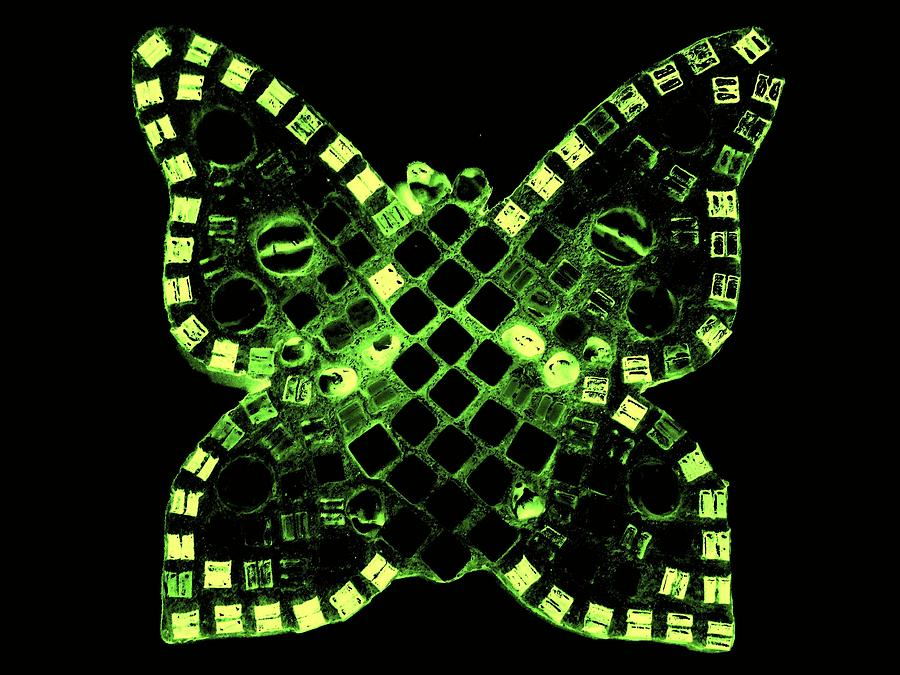 Day Glow Green Relief - Dayglo Butterfly by Lisa Brandel
