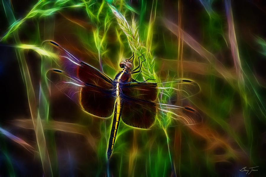 Dragonfly Photograph - Dazzling Dragonfly by Barry Jones