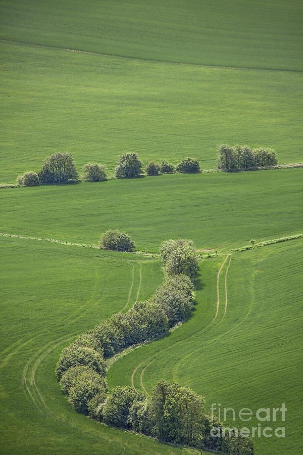 Dazzling Green Photograph