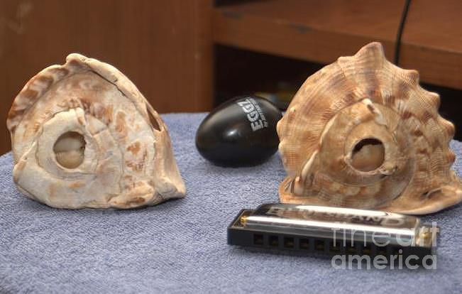 Conch Egg Shaker And Harmonica  Pyrography - De Conch Shell by William  James