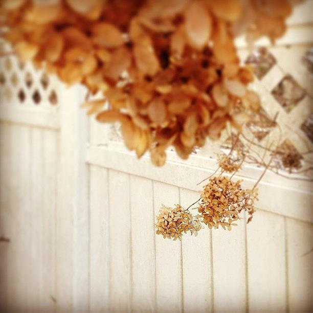 Brown Photograph - #dead #flowers #brown #focus #wtf by Amber Campanaro