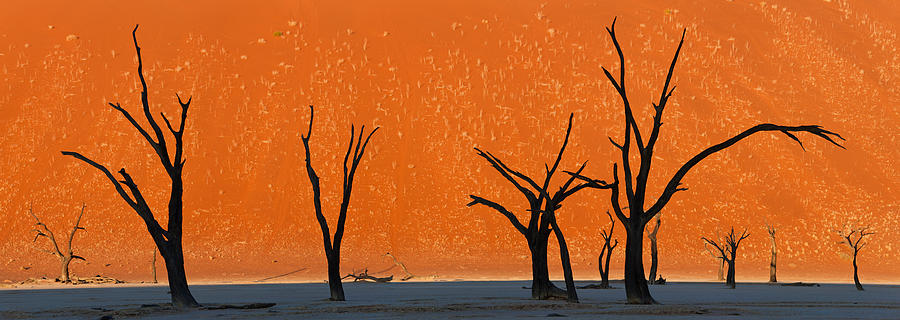 Color Image Photograph - Dead Trees By Red Sand Dunes, Dead by Panoramic Images