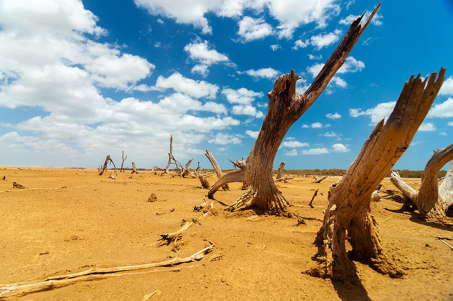 Desert Photograph - Dead Trees In A Desert Wasteland by Jess Kraft