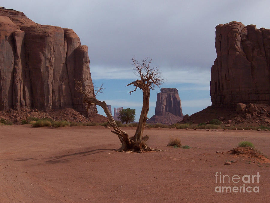 Monument Valley Photograph - Dead-wood by Luke Moore