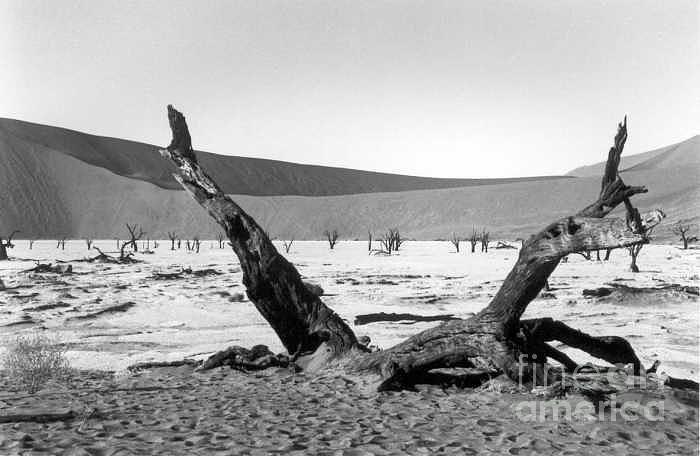 Acacia Trees Photograph - Deadvlei by Susan Chandler
