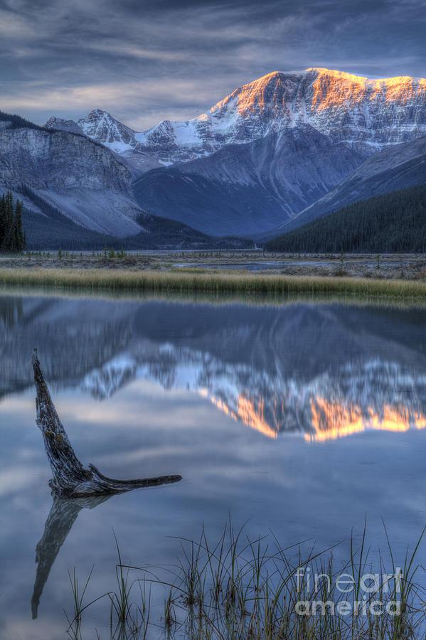 Alberta Photograph - Deadwood At Beauty Creek Sunrise by Brian Stamm