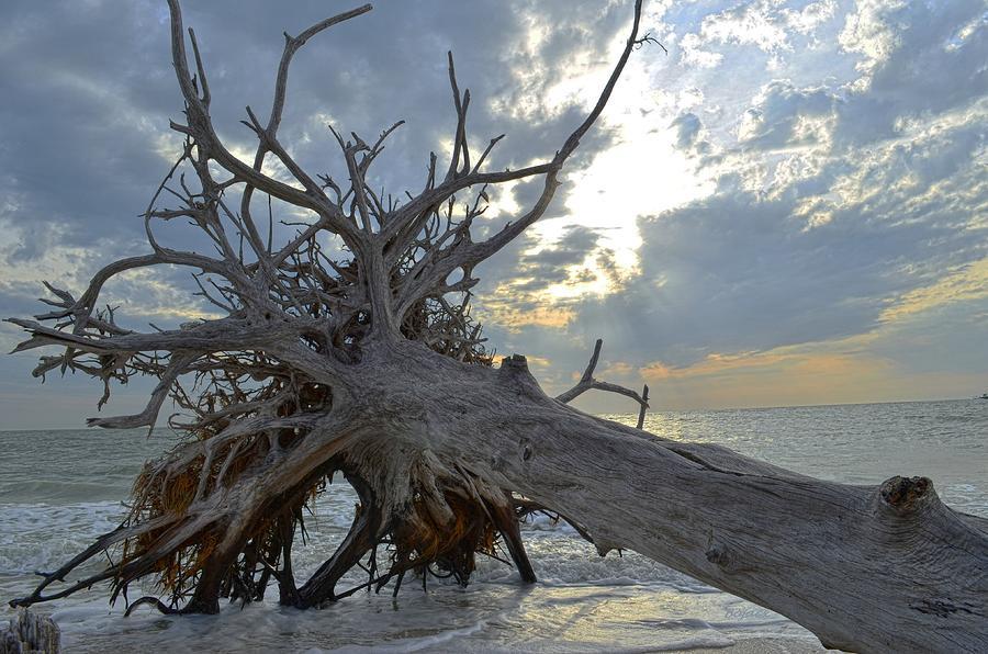 Gulf Photograph - Deadwood by Bob Jackson