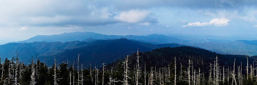 Trees Photograph - Death In The Smokys by Paul Johnson