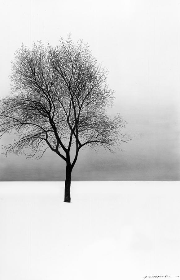 Nature Drawing - December 11 by Doug Fluckiger