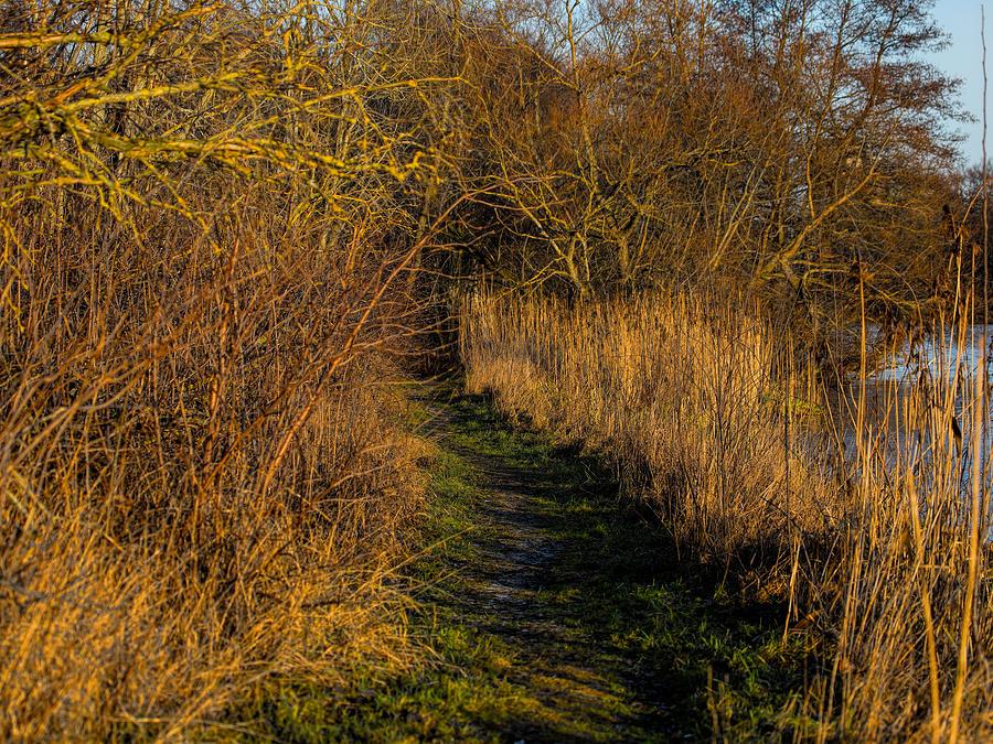 Landscape Photograph - december light - Leif Sohlman by Leif Sohlman