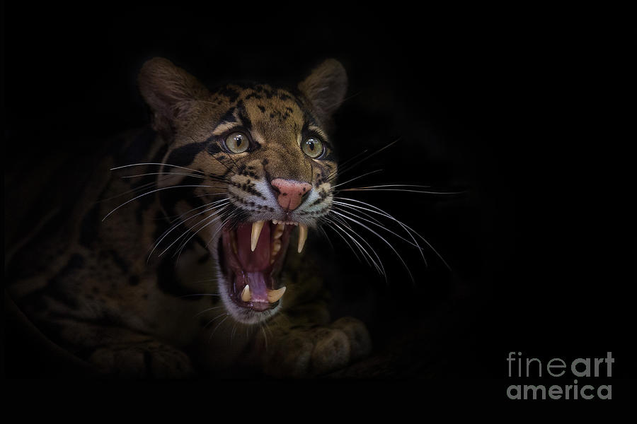 Angry Photograph - Deceptive Expressions by Ashley Vincent