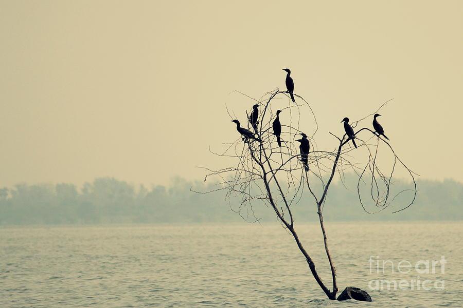 Black Photograph - Decision Tree by Vishakha Bhagat