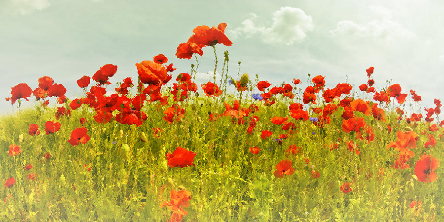 Papaver Photograph - Decorative-art Field Of Red Poppies by Melanie Viola