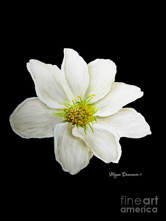 White Flower Art Images - Flower Decoration Ideas