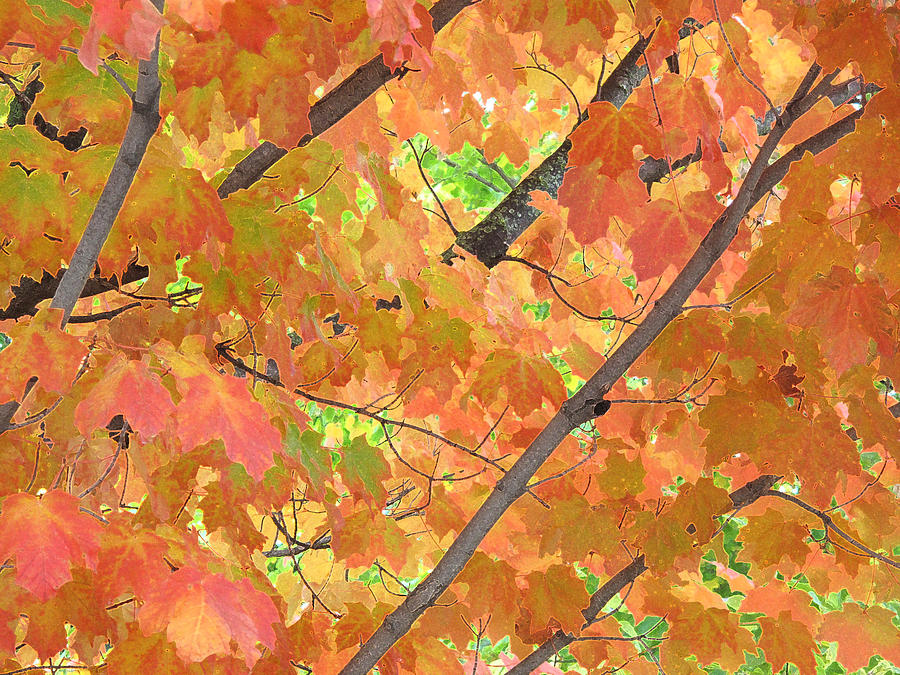 Abstract Photograph - Deep Autumn Wcae  by Lyle Crump