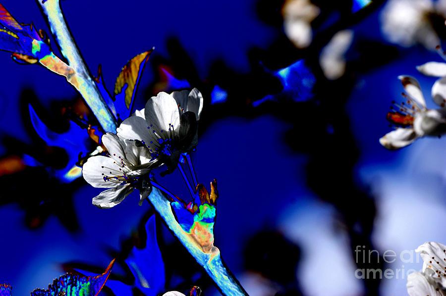 Flowers Digital Art - Deep Blue by Carol Lynch