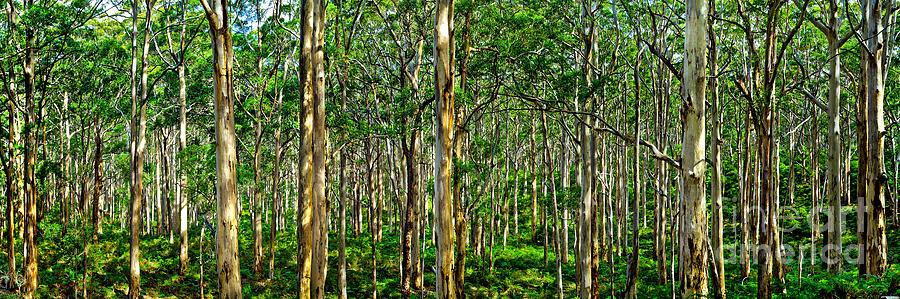 Wa Photograph - Deep Forest by Az Jackson