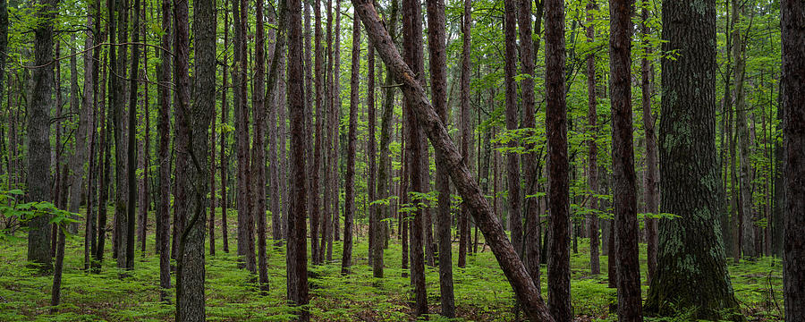 Deep Forest Photograph By Steve Gadomski