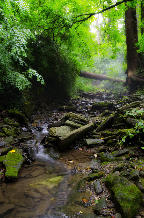 Deep Photograph - Deep In The Woods by Bill Cannon