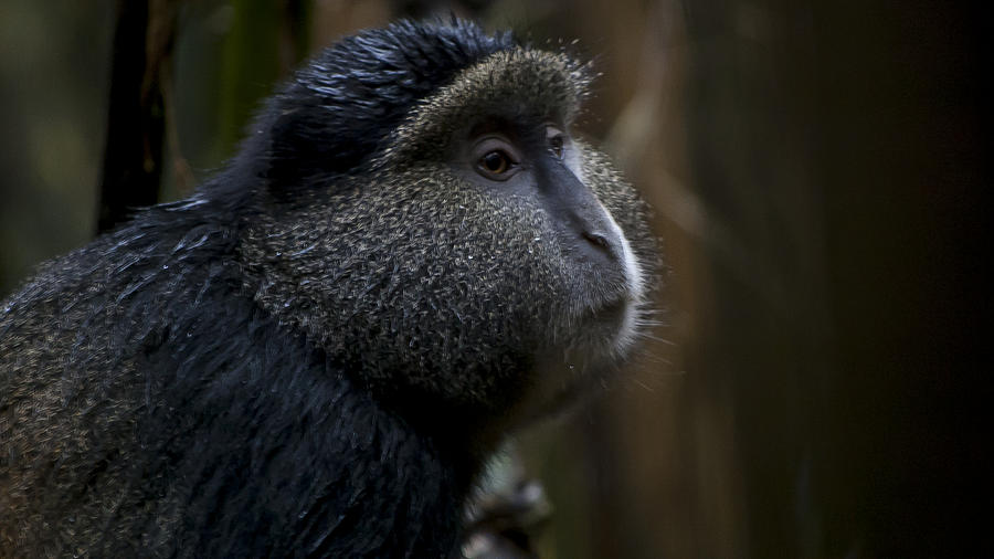 Rwanda Photograph - Deep In Thought by Paul Weaver