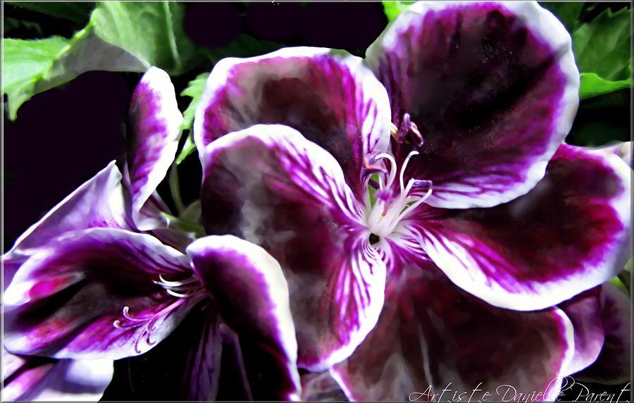 Parent Photograph - Deep Purple Vibrant Flower Macro by Danielle  Parent