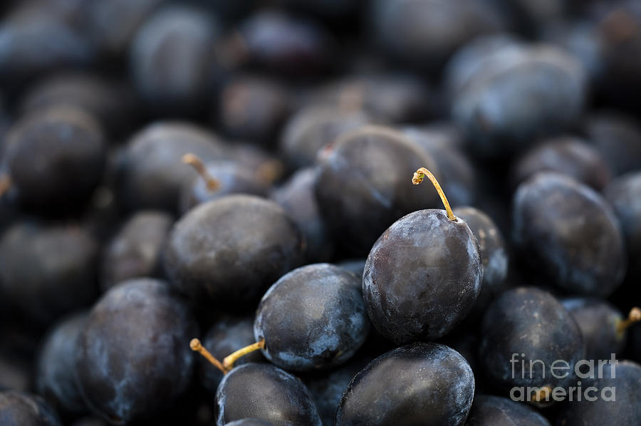 Autumn Photograph - Deeply Damson by Anne Gilbert
