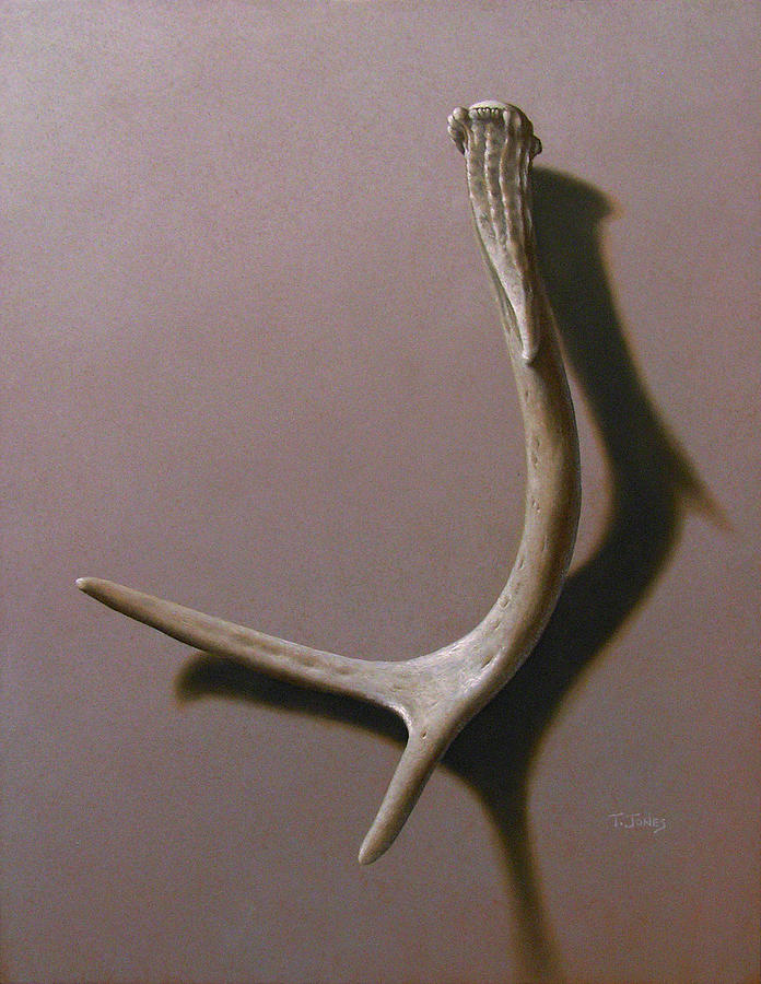 Deer Painting - Deer Antler by Timothy Jones