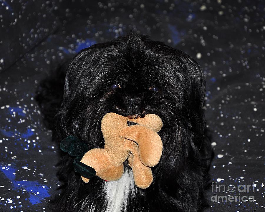 Dog Photograph - Deer Dog by Al Powell Photography USA