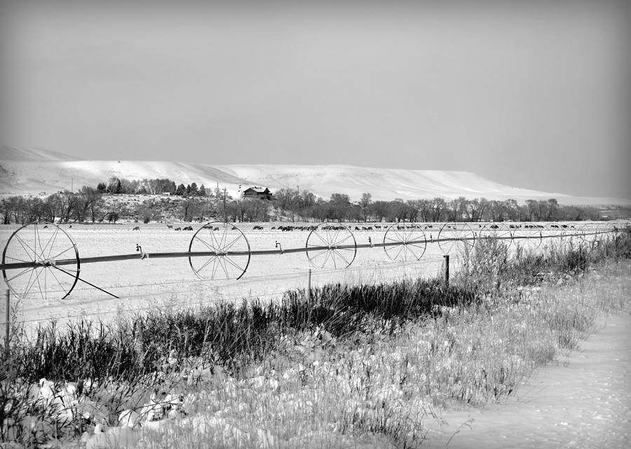 Deer Herd In Winter Photograph