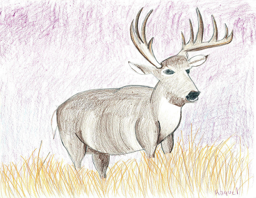 Deer Drawing - Deer In The Grass At Dusk by Fred Hanna